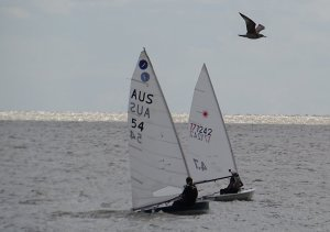 Yvonne Gough in her Laser 4.7 leads Clare Giles in her Europe, whilst a seagull takes a quick look